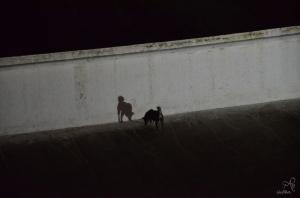Perro en la stupa